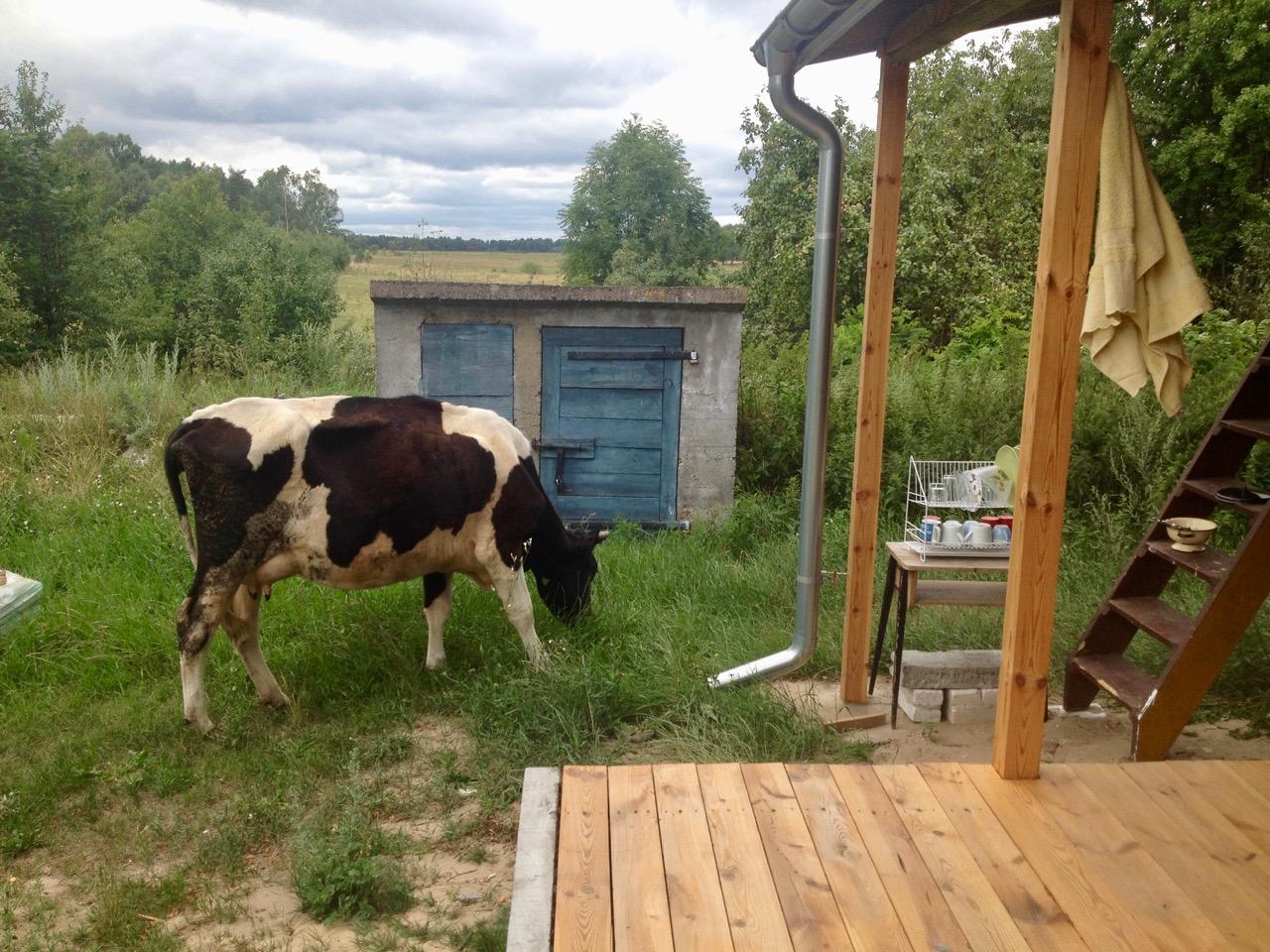krowa podwórze ganek