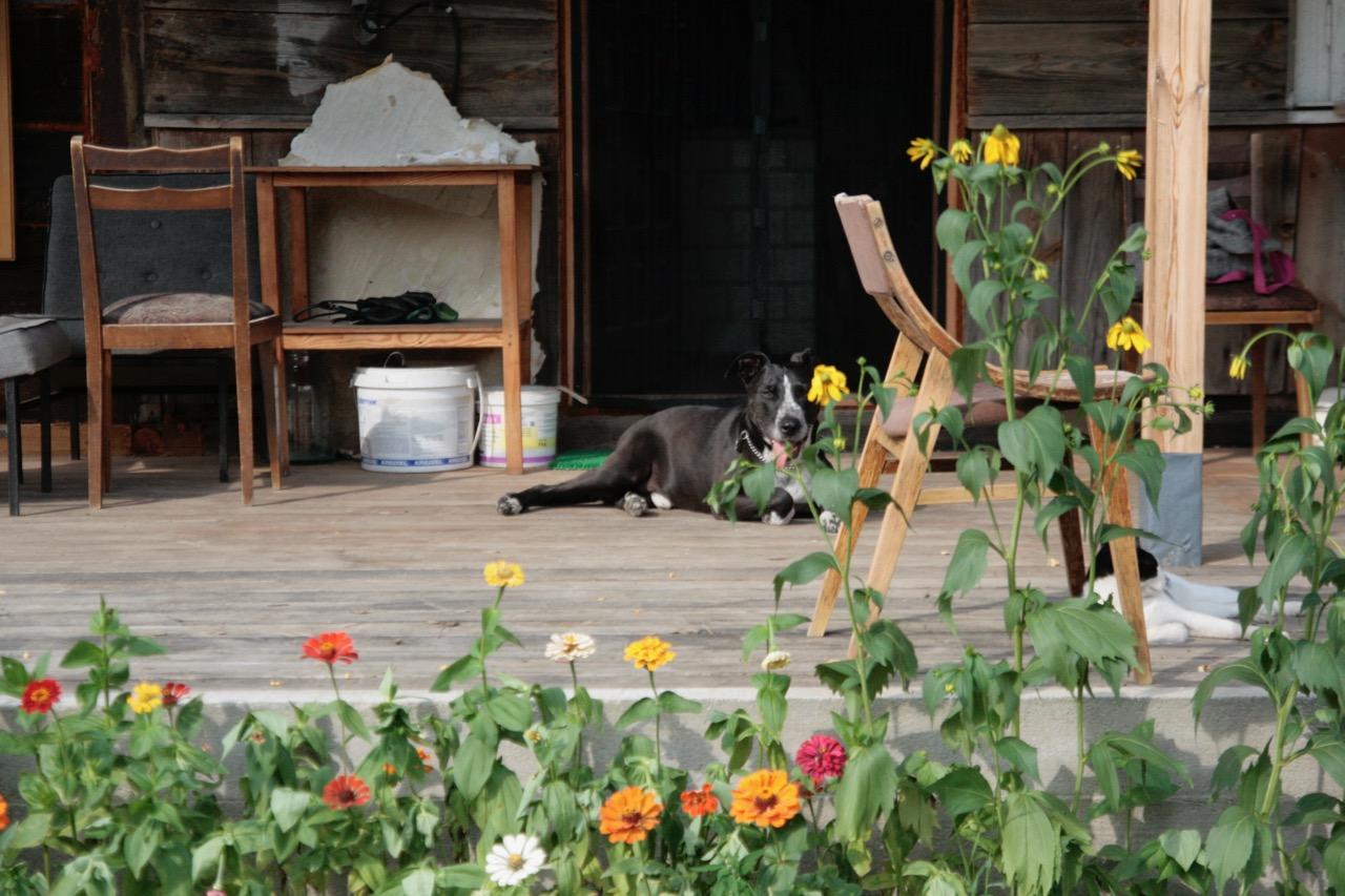 pies i kot na werandzie