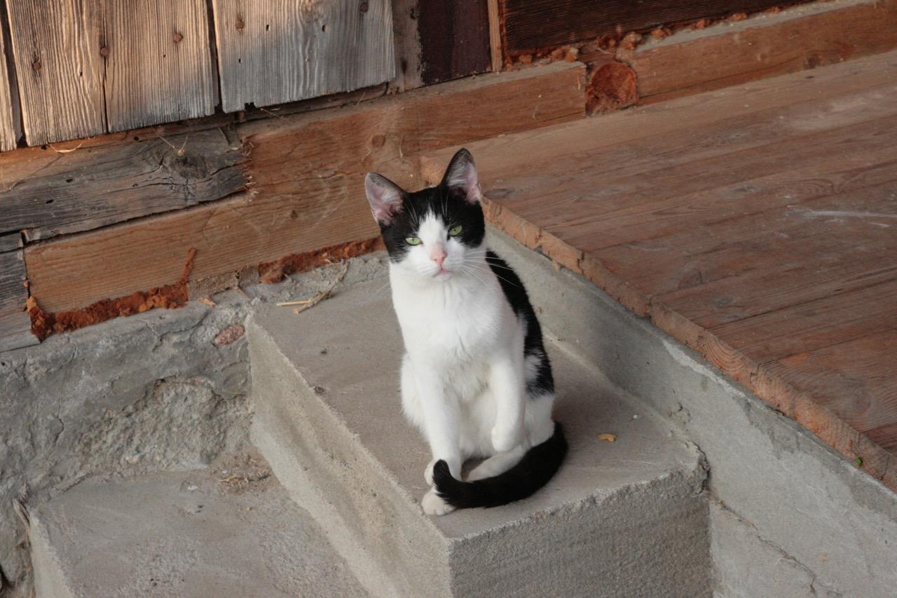 kot na schodach