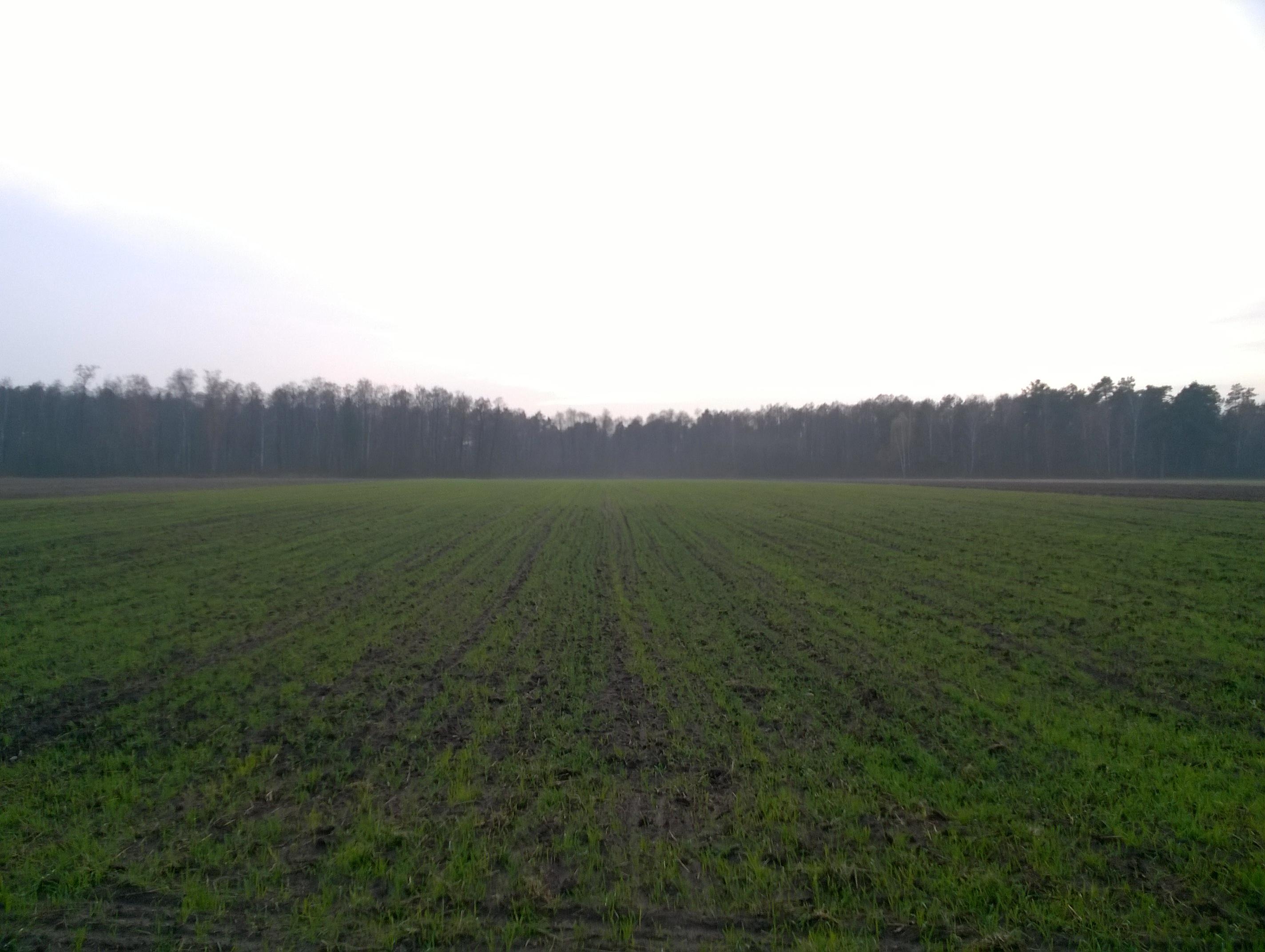 mój pierwszy raz pole zasiane żyto pastar