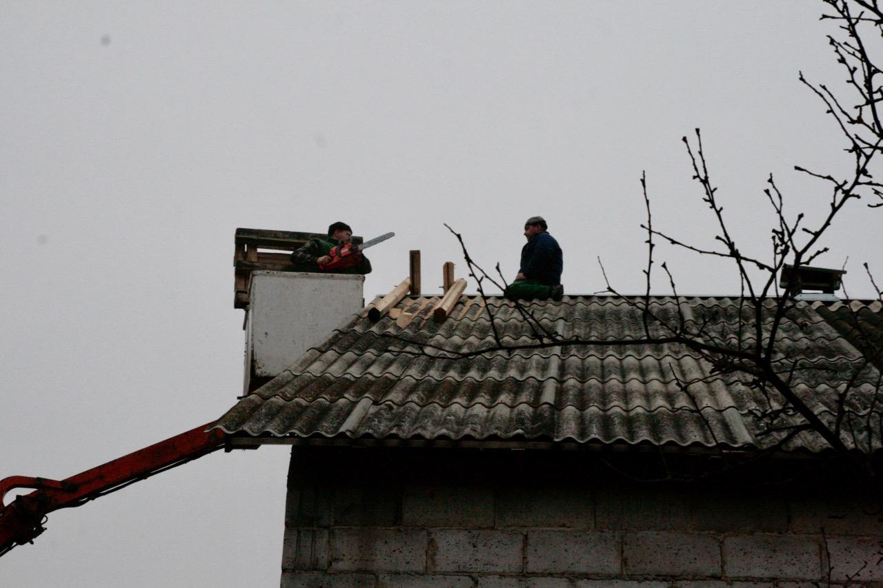 Przycinanie krzyżaków pod platformę dla bociana.