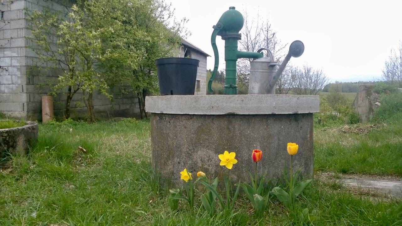 studnia tulipany żonkile złota górka