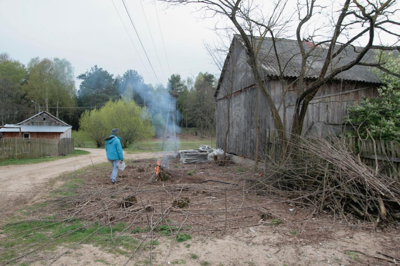 wycinka akacji odrosty akacji